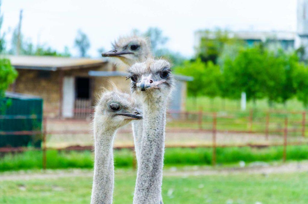 10 лучших достопримечательностей в Керчи